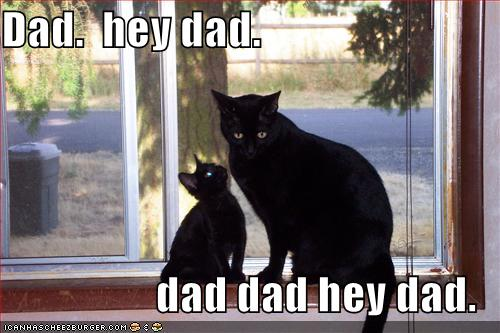 lolcats-funny-pictures-hey-dad
