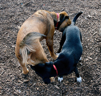 flickr-butt-sniffing-ying-yang-scaled