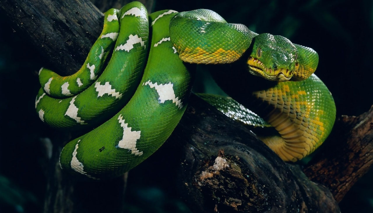 green-snake-on-tree